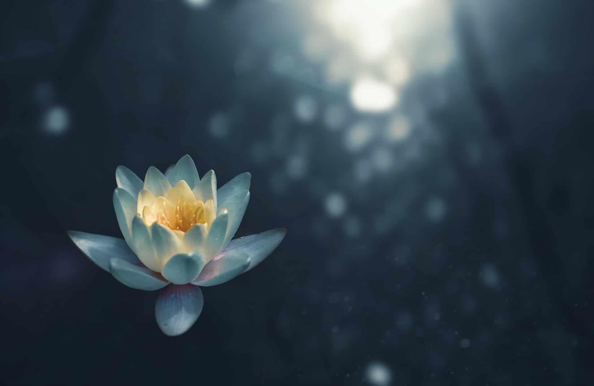 Renkli Yin Yoga Eğitimi