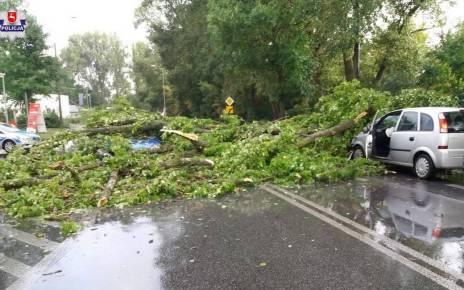 spadły połamane drzewa i ich konary