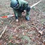 Bomba lotnicza znaleziona w lesie