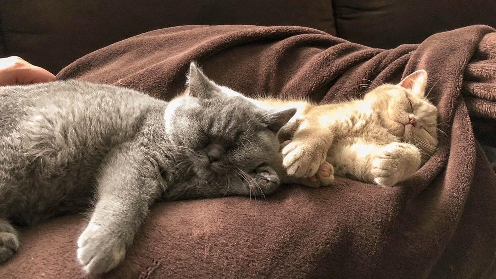 Leonardo en Lauro slapen bank
