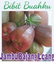 Jambu Air Bajang Leang