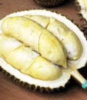 pemenang kontes durian