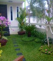 gambar tanaman hias rumput gajah mini