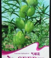 gambar benih bunga balon