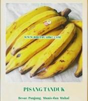 gambar bibit buah pisang tanduk