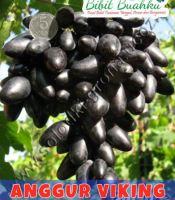 buah anggur viking