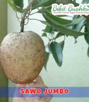sawo jumbo