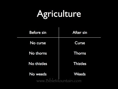 Agriculture before sin: no curse, no thorns, no thistles, and no weeds. Agriculture after sin: curse, thorns, thistles, and weeds.