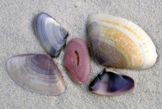 Even Shells Are Very Diverse