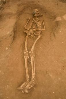 One of the skeletons excavated from the Philistine cemetery at Ashkelon.