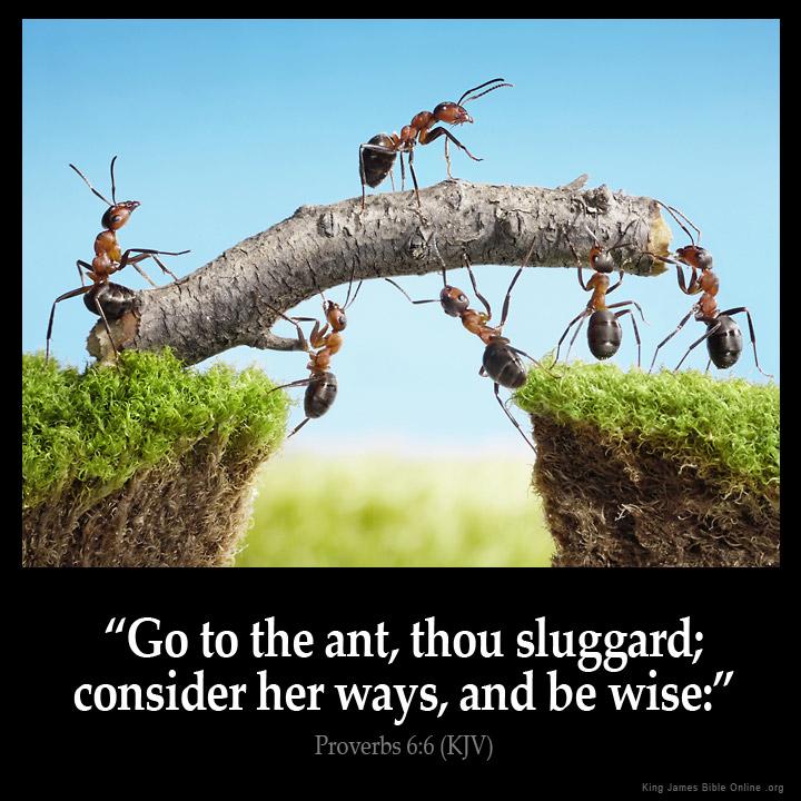 Image result for proverbs 6:6-8 kjv