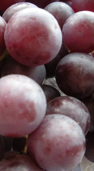 Irish grapes
