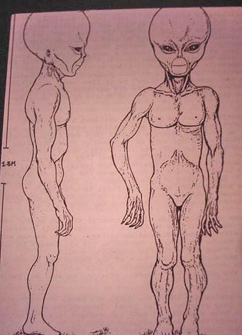 https://i1.wp.com/www.bibliotecapleyades.net/imagenes/montauk_alien_3.JPG