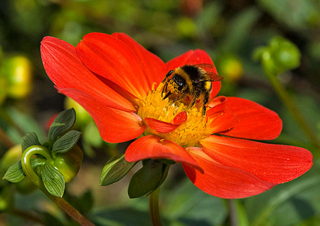 The Co Evolution of Bees and Flowers   An Electric Symbiosis Not to         your nursery flowers and plants with neonicotinoid insecticides  you  are likely interrupting an age old dance carried out between bees and  flowers
