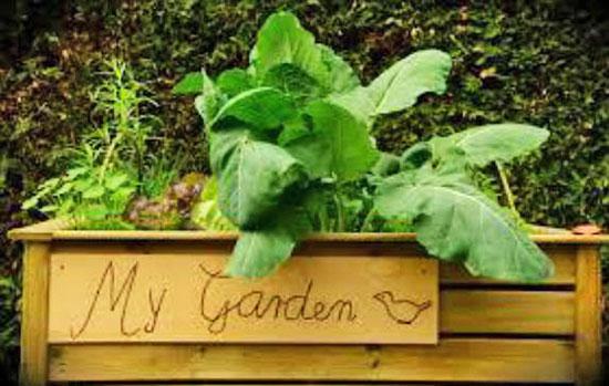 Build Your Own Vegetable Garden Box