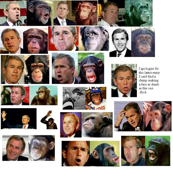 Bush and chimp photographs