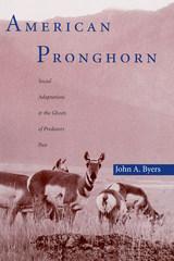 amer pronghorn