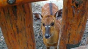 zoo budapest