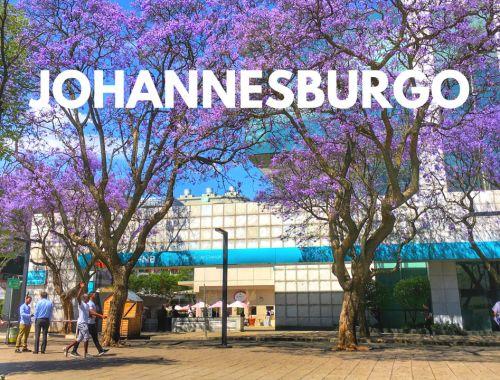 Johannesburgo, Sudáfrica - Bichito viajero