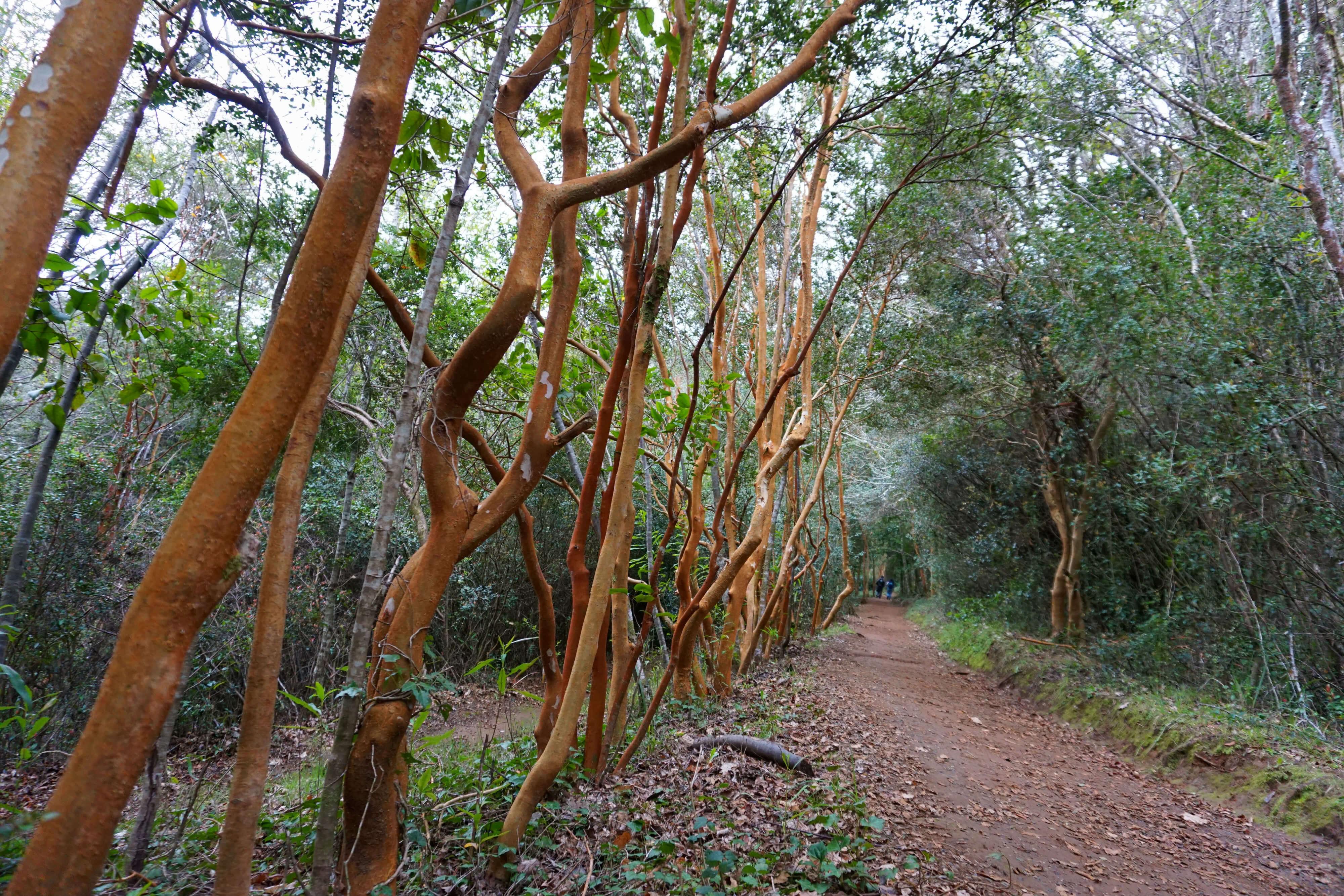 Arboretum en Valdivia – Bichito viajero