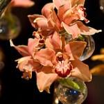 Take a Family Trip to Hawaii at the Philadelphia International Flower Show