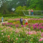 Savill Gardens - 24th June