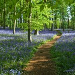 thumb_bluebell_wood-coton_manor_1024