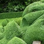 topiary_design (1)