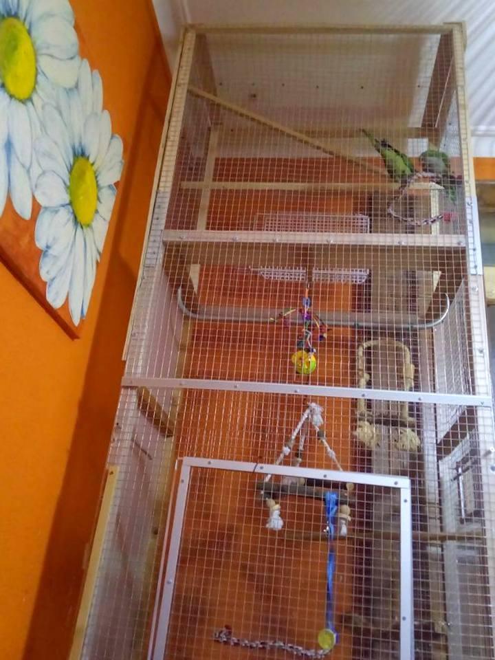 Cages Pour Oiseaux IKEA Une Nouvelle Maison Pour Mes