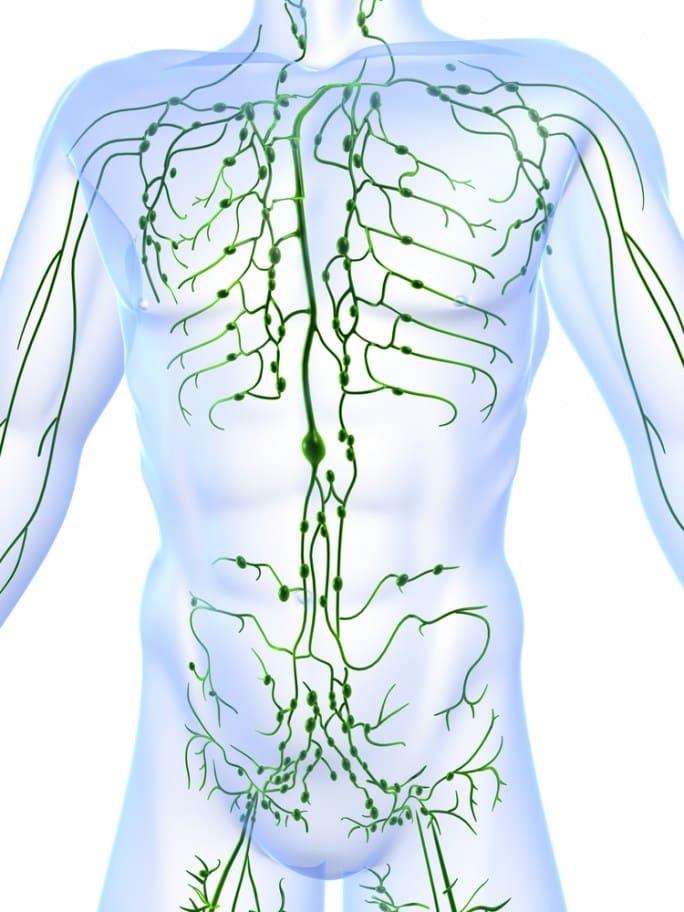 Qigong y Yoga - Beneficios sobre el sistema linfático