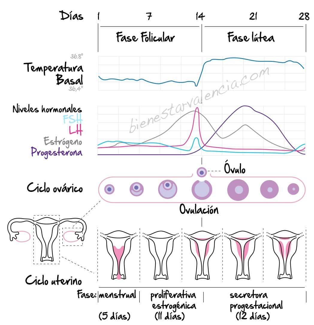 control del ciclo menstrual