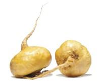 """Résultat de recherche d'images pour """"maca qualité du sperme"""""""