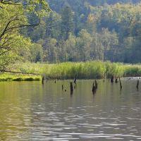 Jeziorko Bobrowe w Huczwicach