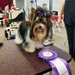 Rocky Mountain's Sir Remington wins BOB