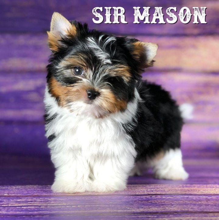 Rocky Mountain's Sir Mason