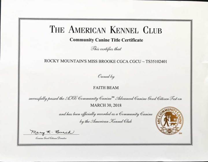 Rocky Mountain's Miss-Brooke Biewer Terrier AKC Community Canine Title Certificate
