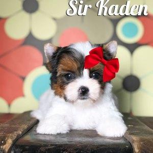 Rocky Mountain's Sir Kaden