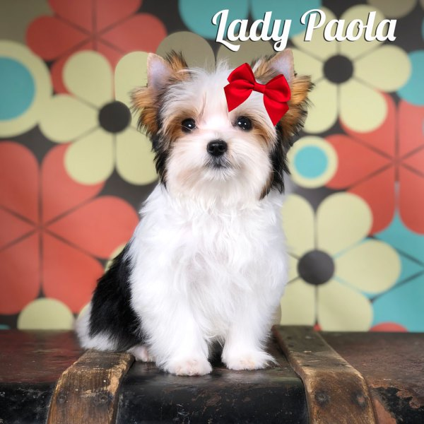 Paola Biewer Terrier