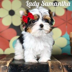 Samantha Biewer Puppy
