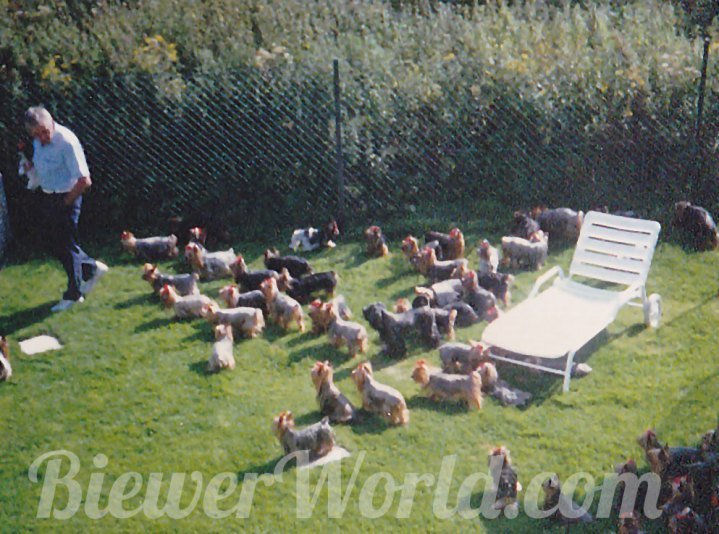 Werner Biewer in the yard with the dogs