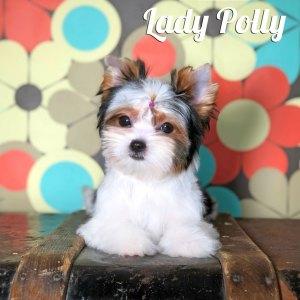 Polly Biewer Puppy