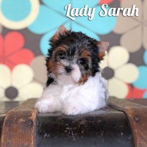 Sarah Biewer Puppy