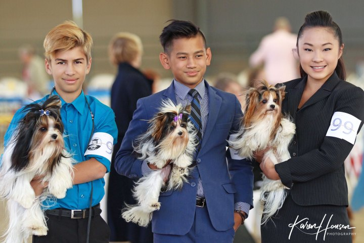 Biewer Terriers and AKC Junior Handlers