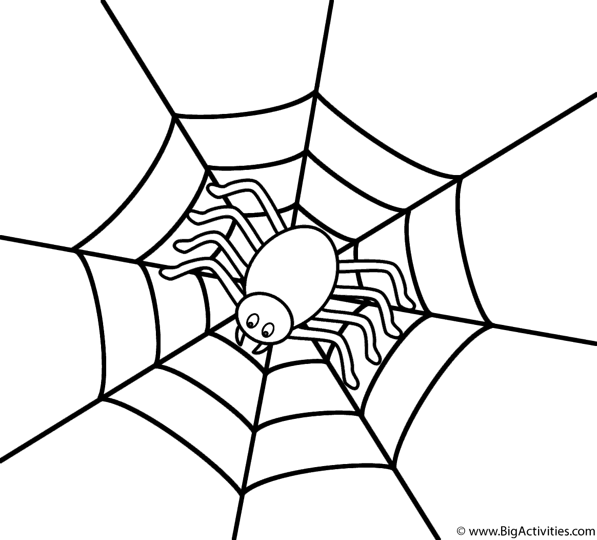 Spider In The Center Of Web
