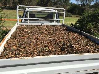 Sustainability Tip: Get your mulch for free - from the tip!