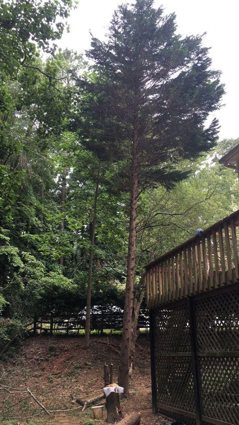 Need estimate to cut tree and remove debris