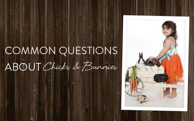 Common questions about chicks and bunnies