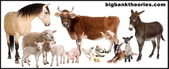 Nama - Nama Hewan Ternak Dalam Bahasa Inggris