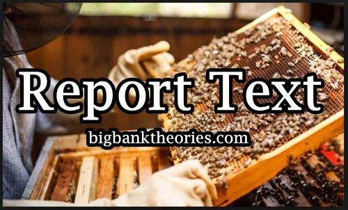 Penjelasan Lengkap Tentang Report Text Dalam Bahasa Inggris