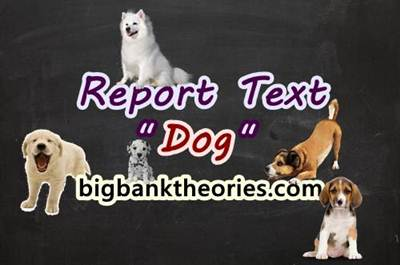 Report Text Bahasa Inggris Tentang Anjing